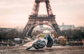 Amoureux in Paris